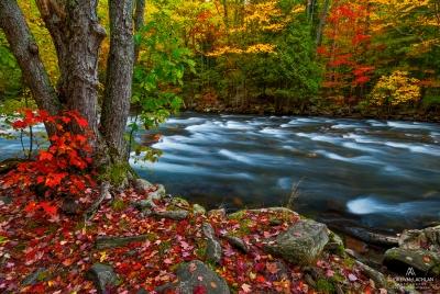 Autumn colour along the Kennisis River in the Haliburton Highlands, Ontario, Canada