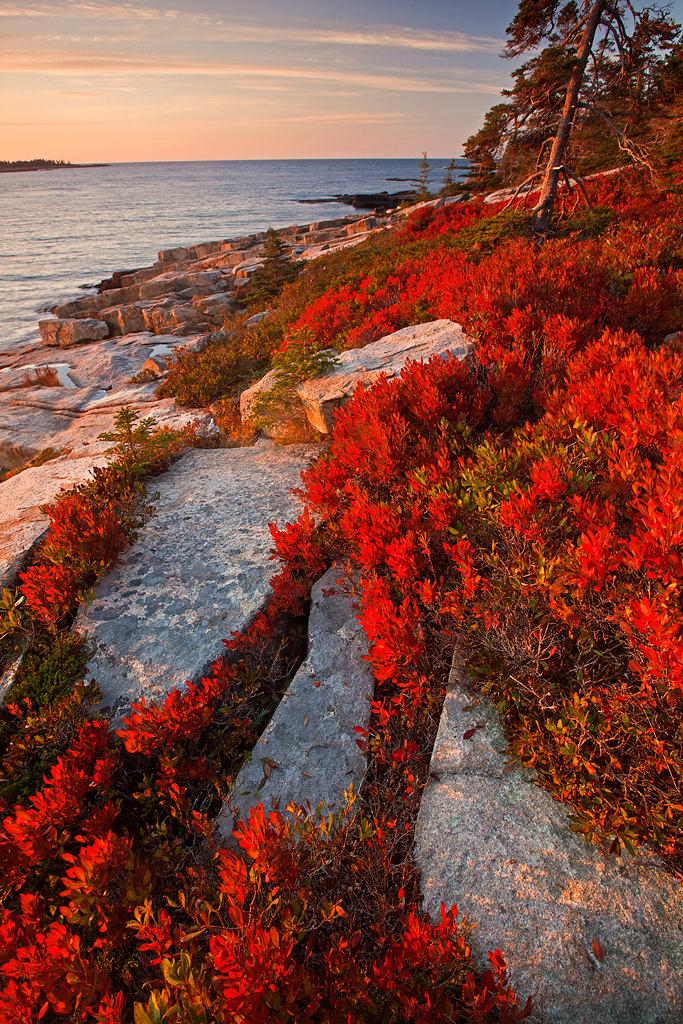 Coastline on the Schoodic Peninsula, Acadia National Park, Maine, USA