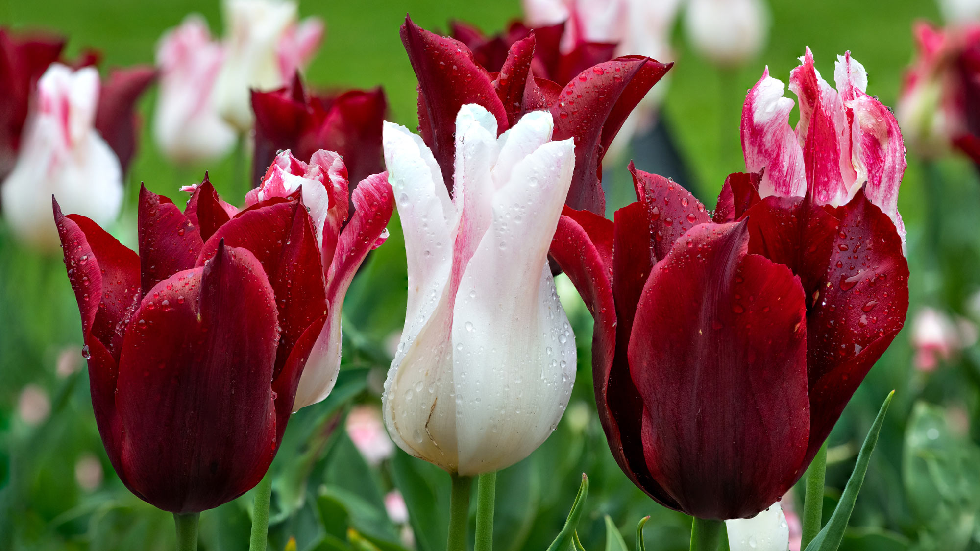 Spring vibrance