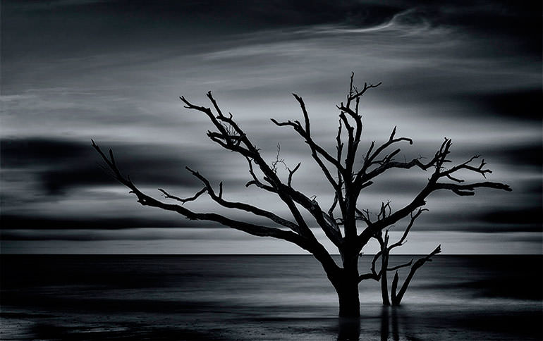 Botany Bay Tree Sunrise