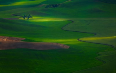 Photo by Kevin McNeal
