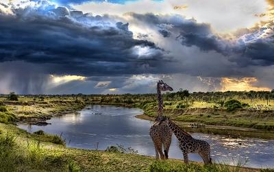 Mara River Storm Giraffe