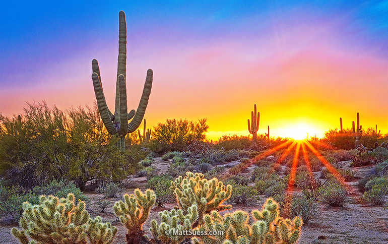 Sonoran Desert DeLight