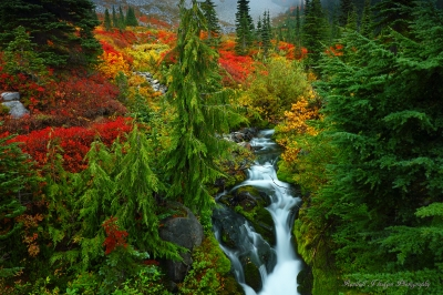 Paradise Creek on the Skyline Trail in Mt Rainier National Park in Washington
