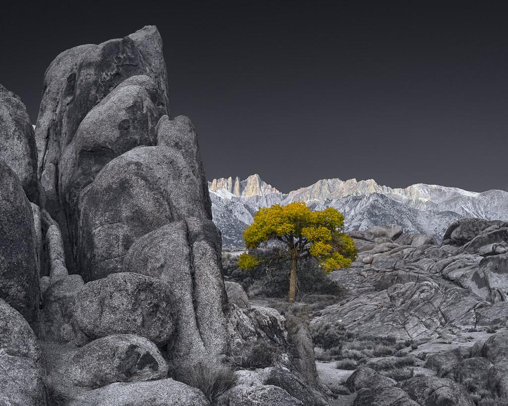 Lone Tree at Sunrise, Alambama Hill, CA.