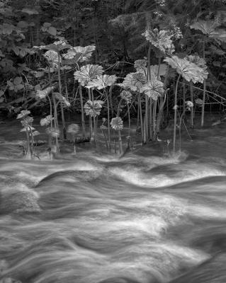 Lithia Creek