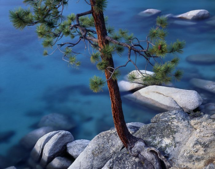Photo taken with LB Neutral Polarizer (Jeffrey pine over a rocky cove on the east shore of Lake Tahoe, Nevada)