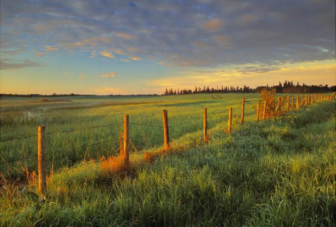Photo taken with LB Warming Polarizer: Pastureland at sunrise near Rollyview, Alberta