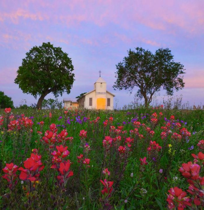Photo taken with LB ColorCombo: Images from around Texas during wildflower spring season
