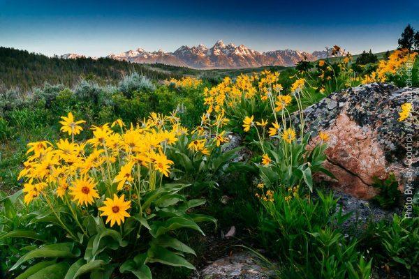 Tetons Mountains Wyoming Jackson Summer
