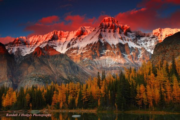 Photo of red sunset with snowy mountains in the backround and trees in the foreground