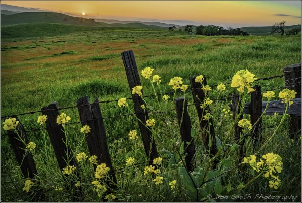 Wildflowers in front of a Fence with a Sunset in the Backround