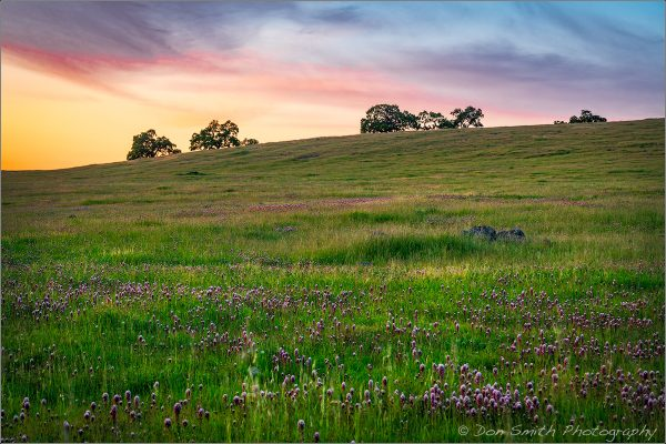 Owl's Clover and Oaks, Southern Santa Clara Valley, Diablo Mountains, California. Sony a7RII, Sony/Zeiss 24-70mm, f/14, 1.7 seconds, ISO 100, Singh-Ray Neutral Polarizer.