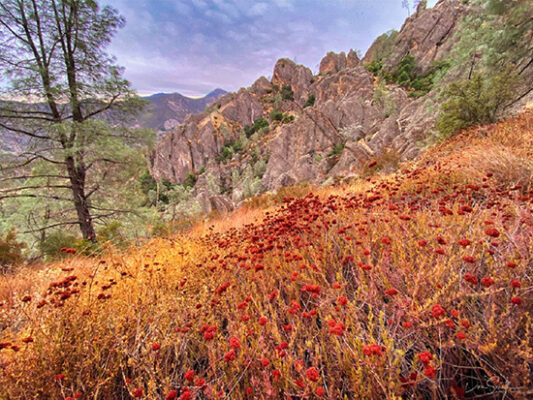 Photographing Pinnacles National Park With IPHONE 11 Pro Max And Singh-Ray Cell Phone Neutral Polarizer!