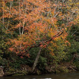 Rushing River in Fall, by Bryan Hansel